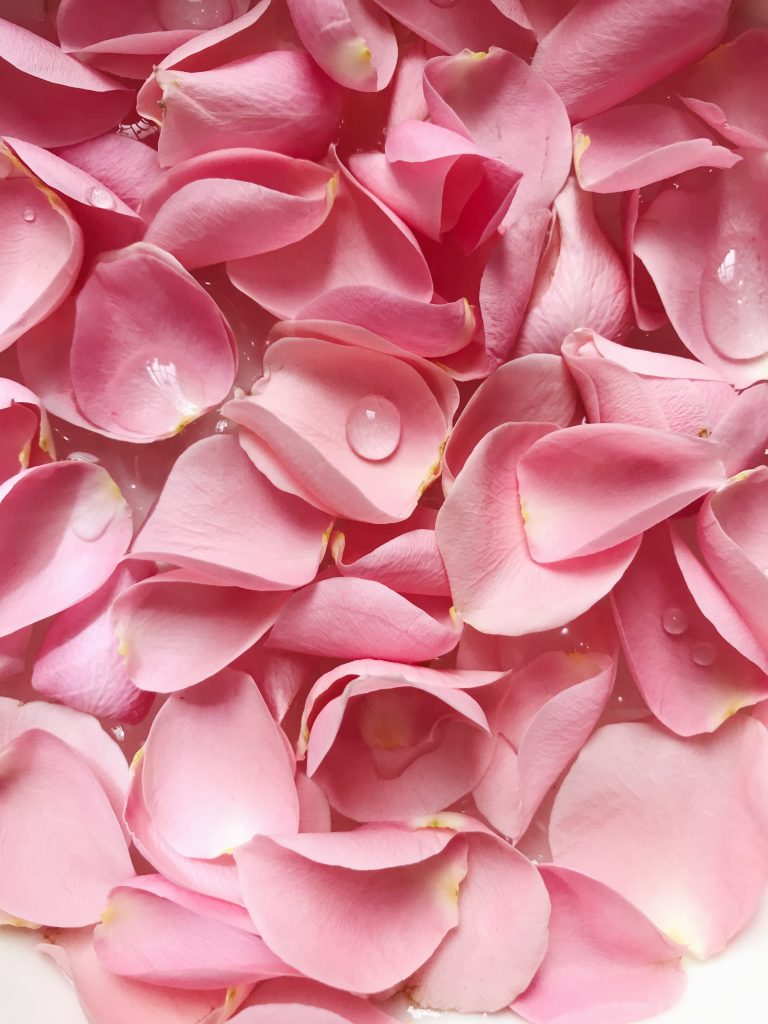 pink flower petals with water droplets
