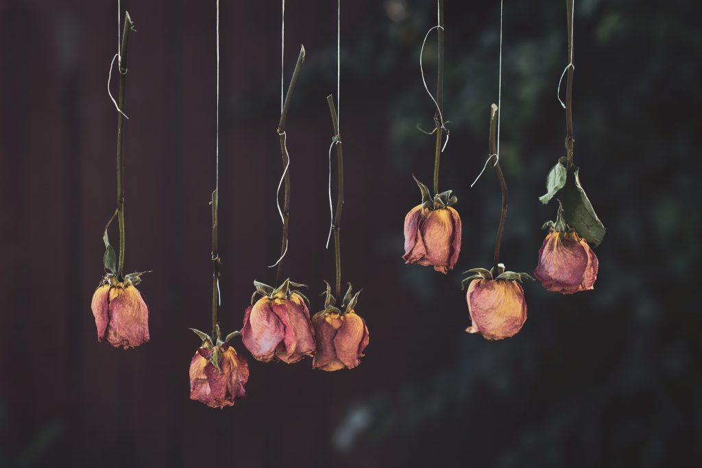 upside down hanging dried roses